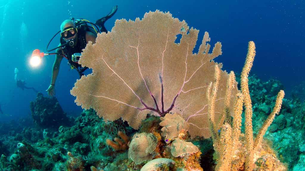 Enjoy the best diving trips in Cuba