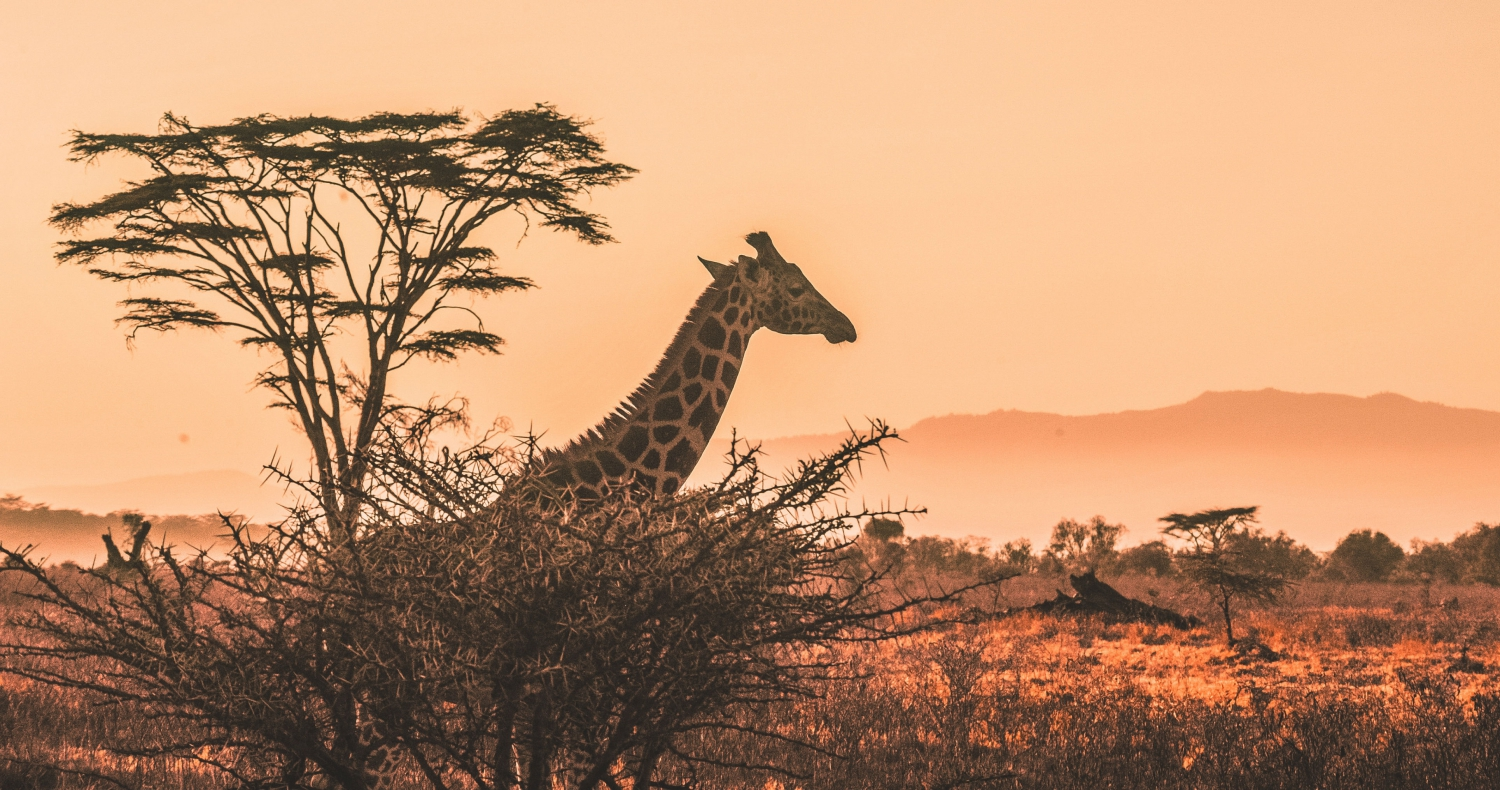 Find Your Next Career Adventure Off The Beaten Path In Zimbabwe