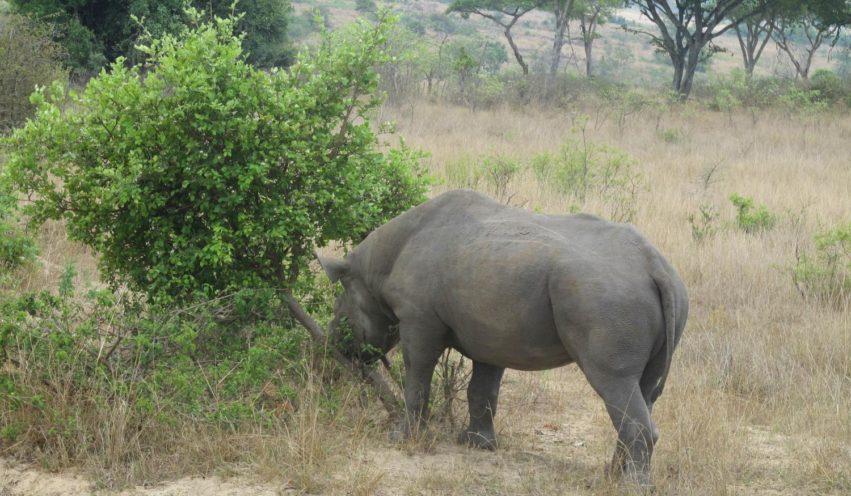 Imire Safari Ranch Visit