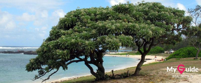 Mauritius Beach - Palmar
