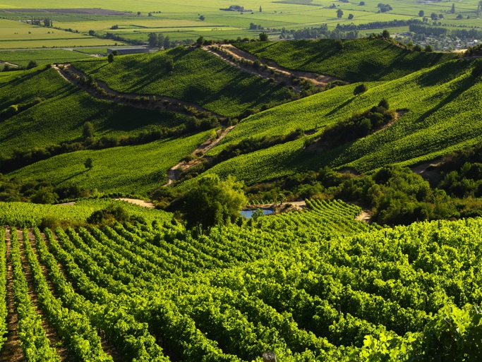 Montes selected among the top wineries by World's Best Vineyards Awards, UK