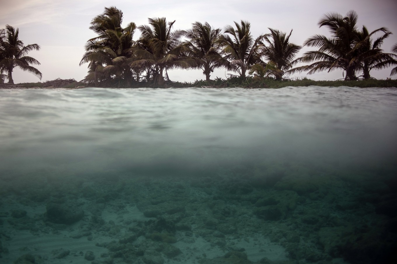The most important reef in America leaves the list of World Heritage in danger of Unesco