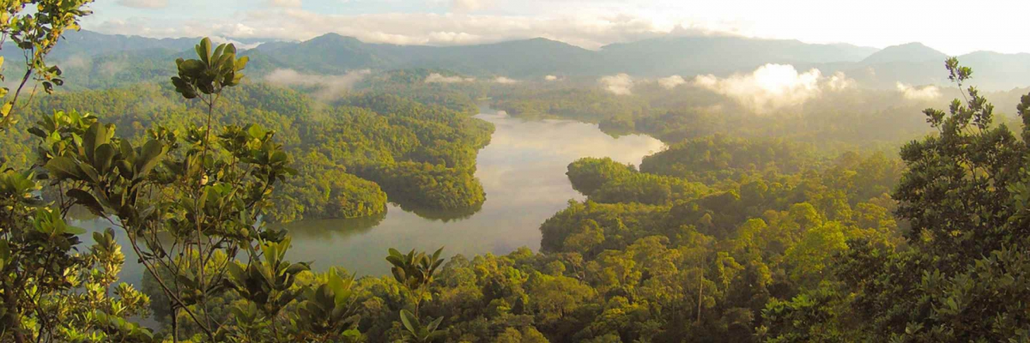 The Peruvian Amazon Rainforest