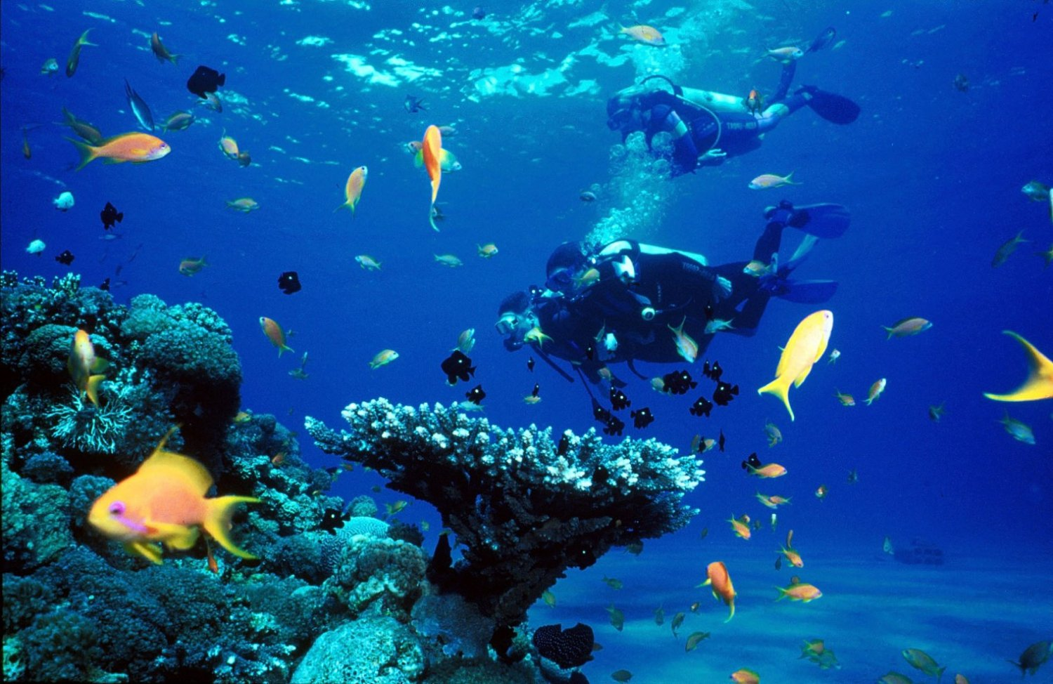 Top 3 Scuba Diving Spots In Malta
