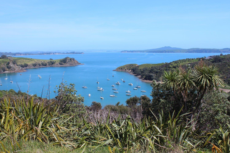 Top 5 Auckland Islands