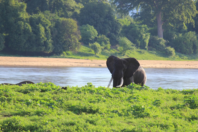 Wildlife Conservation in Zimbabwe