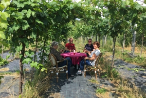 Outer Copenhagen: Guided Vineyard Tour with Wine Tastings