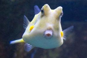 LLoret de Mar: Barcelona Day Trip with Aquarium Visit