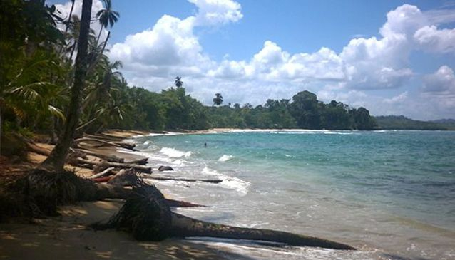 Pura Vida in Puerto Viejo, Costa Rica