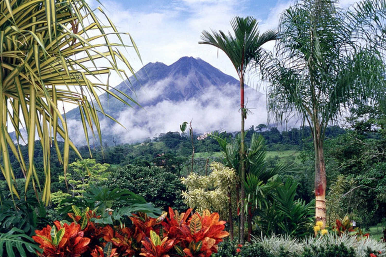 Arenal Volcano 3.5-Hour Rainforest Natural History Walk