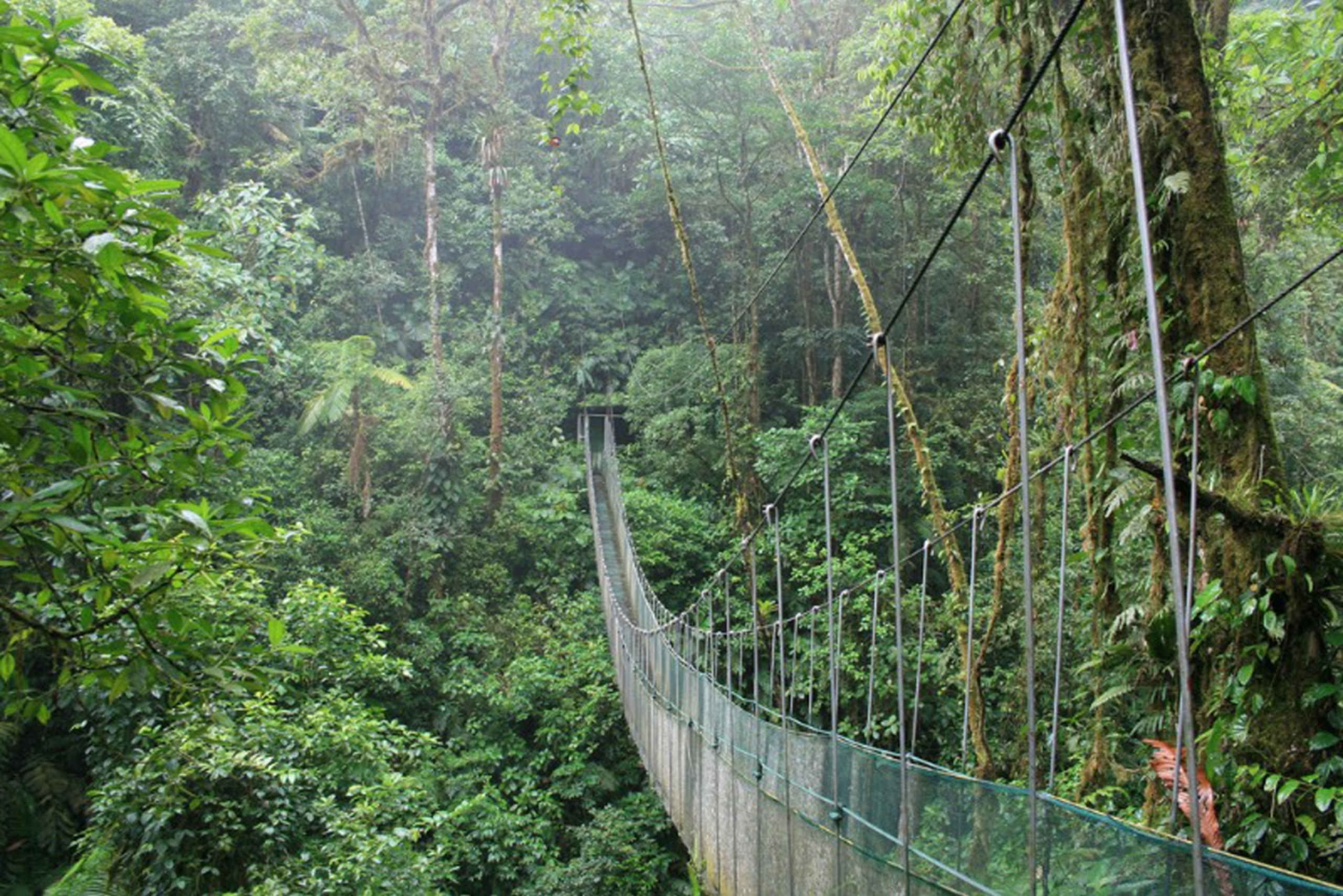 Arenal Volcano: Full-Day Hike from San Jose