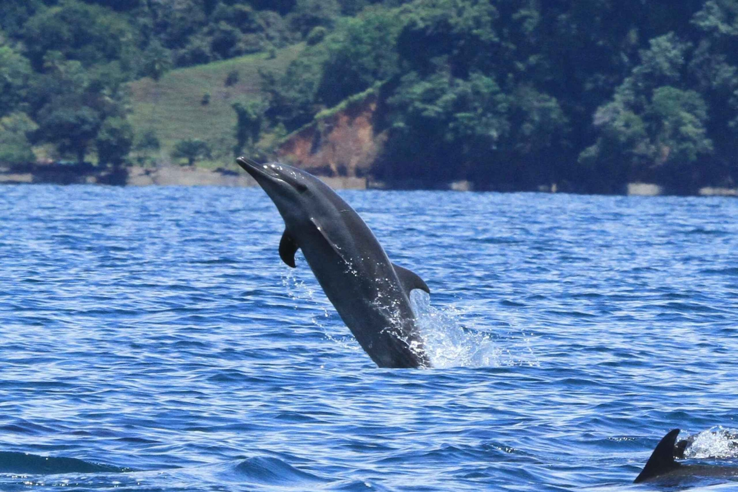 Dolphin Watching and Mangrove Snorkeling Tour at Golfo Dulce