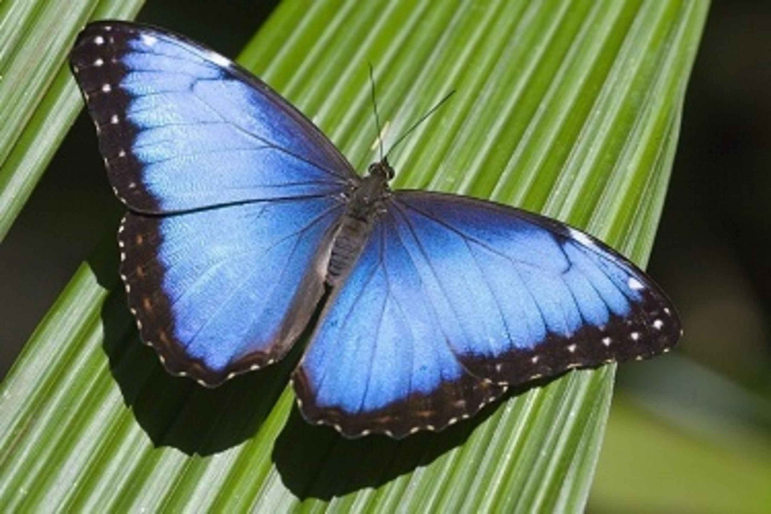 From San Jose: 2-Hour Costa Rica Nature Exploration