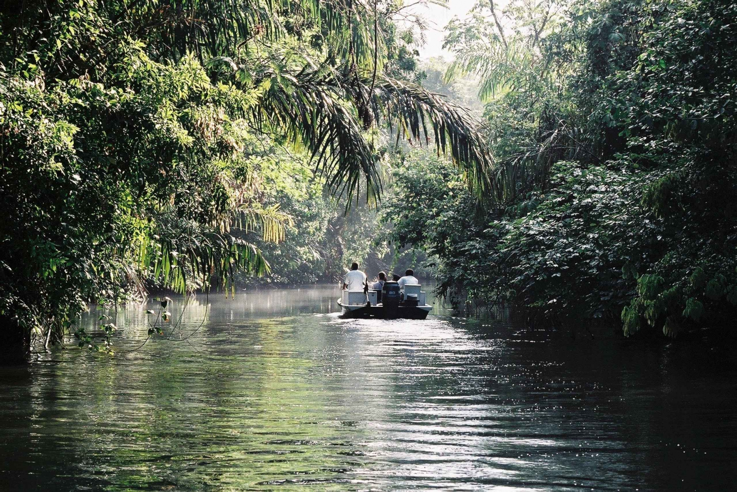 From San Jose: Day Trip to Tortuguero