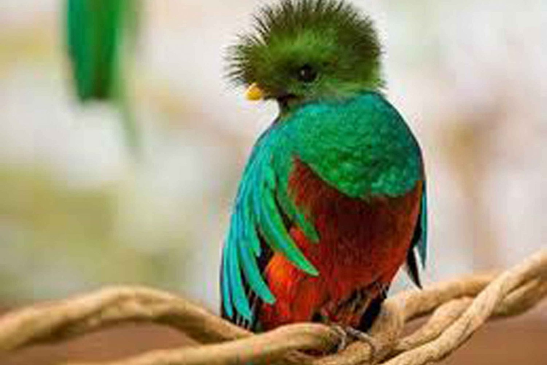 From San Jose: Monteverde Cloud Forest Reserve Tour