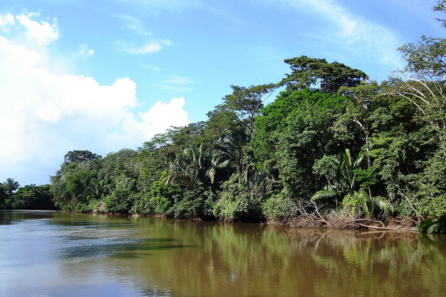 Guanacaste Full-Day Jungle Boat Cruise and Coffee Tour