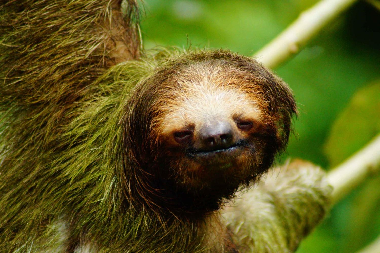 La Fortuna: Sloth Watching Tour