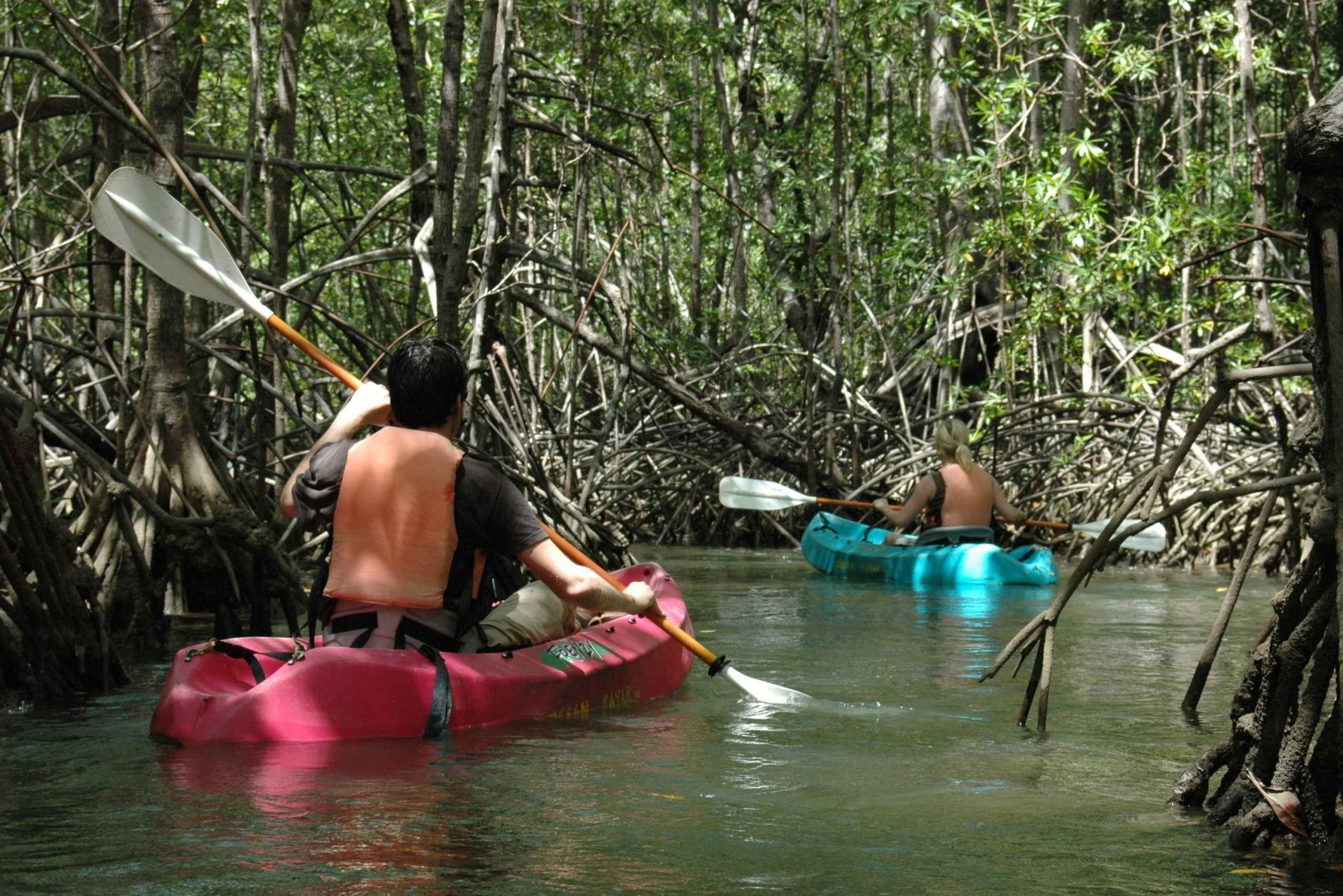 Mangrove Kayaking Tour