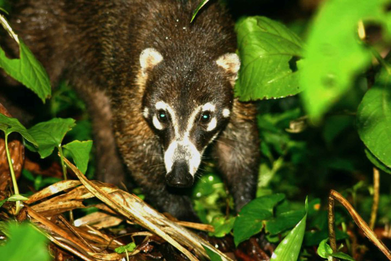 Monteverde Reserve Half-Day Wildlife Observation Tour