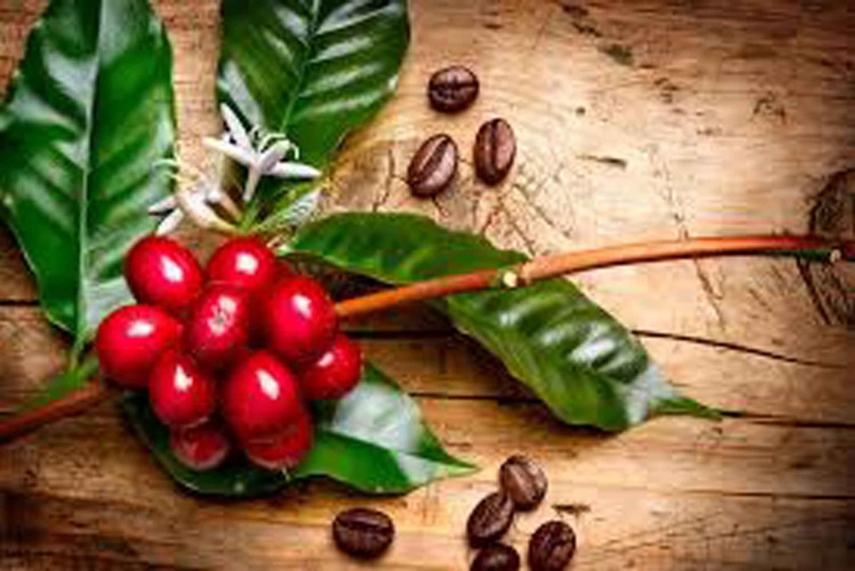 Monteverde Santa Elena: Half-Day Coffee and Chocolate Tour