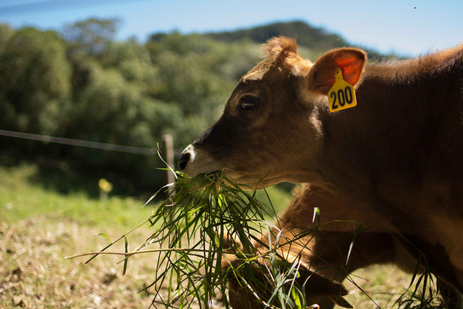Monteverde: Sustainable Farm Tour