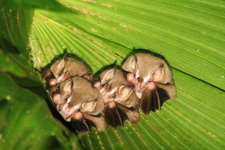 Monteverde: The World of Bats