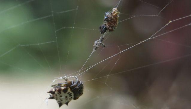 Mundo de los Insectos