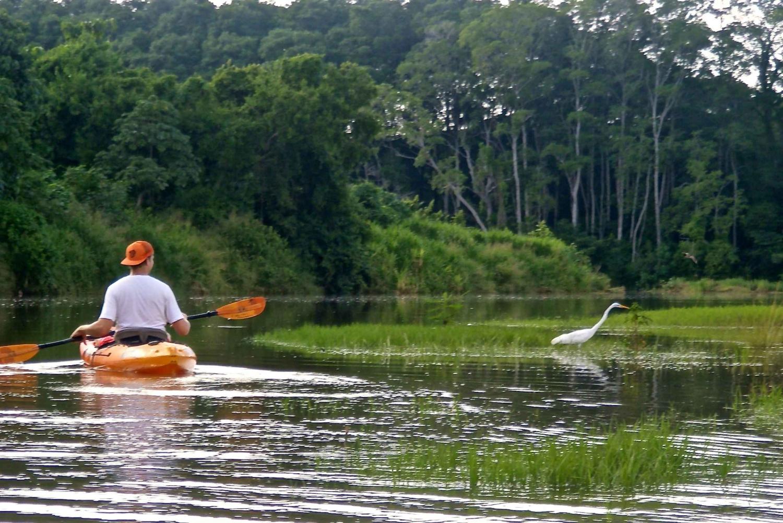 Nosara: Guided Bird Watching Wildlife Hike and Kayak Tour