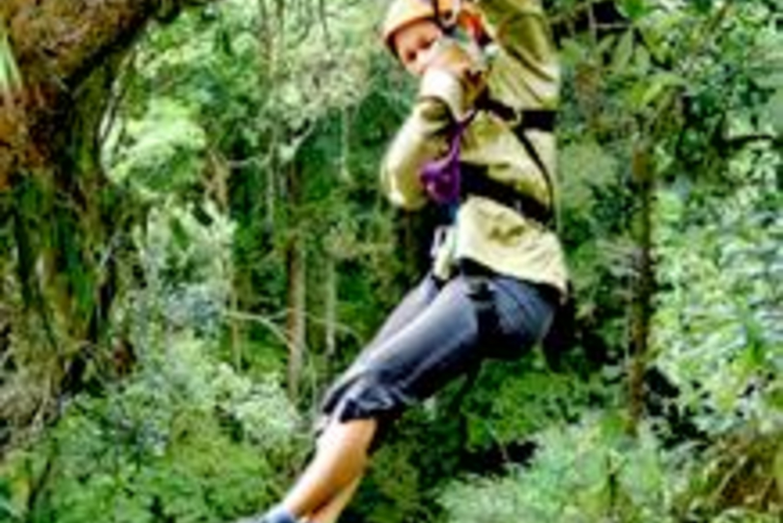 Rainforest Canopy Adventure from San Jose
