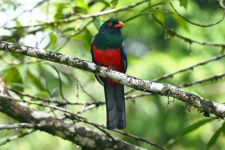 San Jose: Full-Day Monteverde Reserve Birdwatching Tour