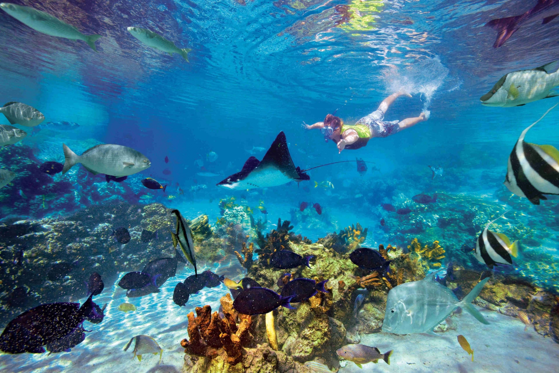 San Juanillo Beach Snorkel Marine Wildlife Tour at Nosara
