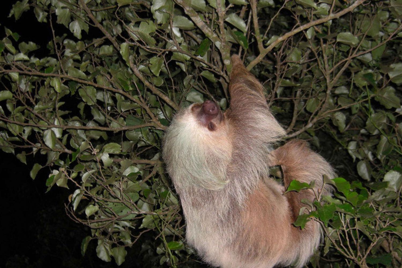 Santa Elena Monteverde: 3-Hour Night Wildlife Hike