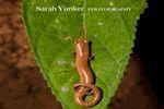 Sarah Yunker Photography