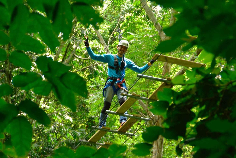 Sky Bridge & Waterfall Climbing Rainforest Tour