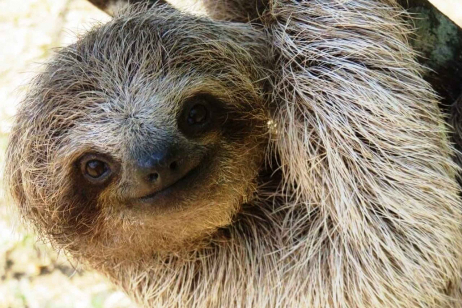 Sloth Encounter & Cultural Towns Half Day Trip From San Jose