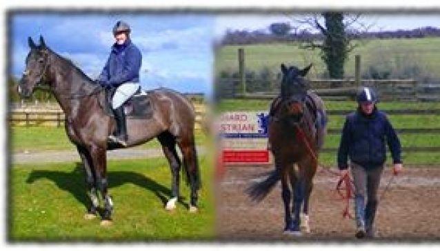 Clare Equestrian Centre