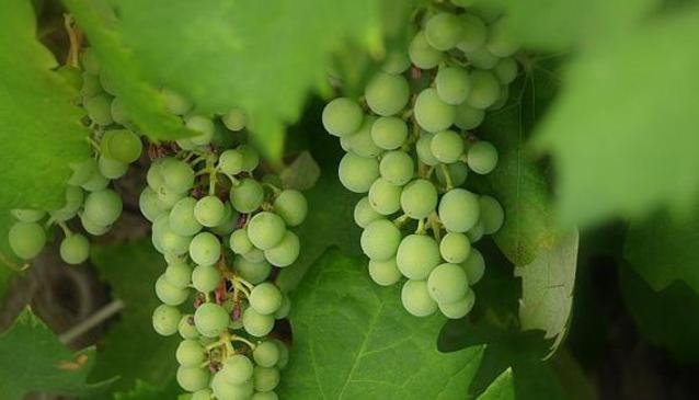 Croatia Wine Tours
