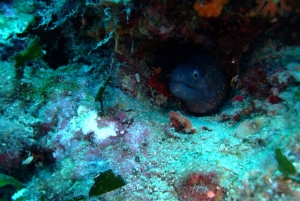 Dubrovnik: 1-Day Diving Package