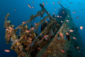 Dubrovnik: 4-5 Day PADI Open Water Diver Course