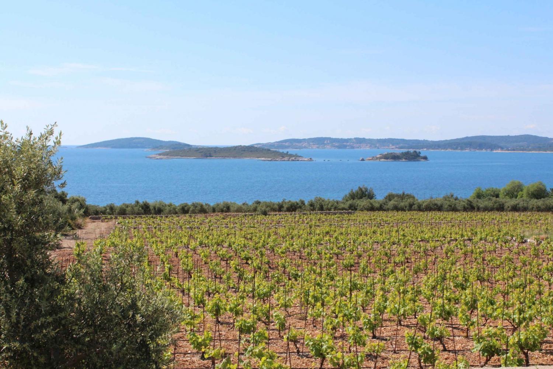 Dubrovnik: Peljesac Peninsula Wine Tasting Tour