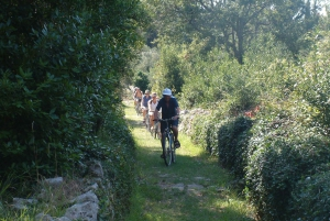 From Dubrovnik: 6-Hour Sipan Island Cycling Tour