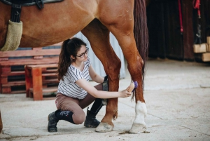 From Split: All-Inclusive Horse Riding and Jeep Exploration