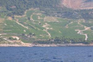 Peljesac Peninsula & Korcula Island Day-Trip from Dubrovnik