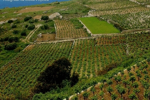 Private Full-Day Wine Tour from Dubrovnik to Peljesac