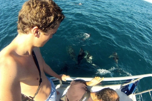 Pula: Natural Dolphin Watching Experience with Dinner