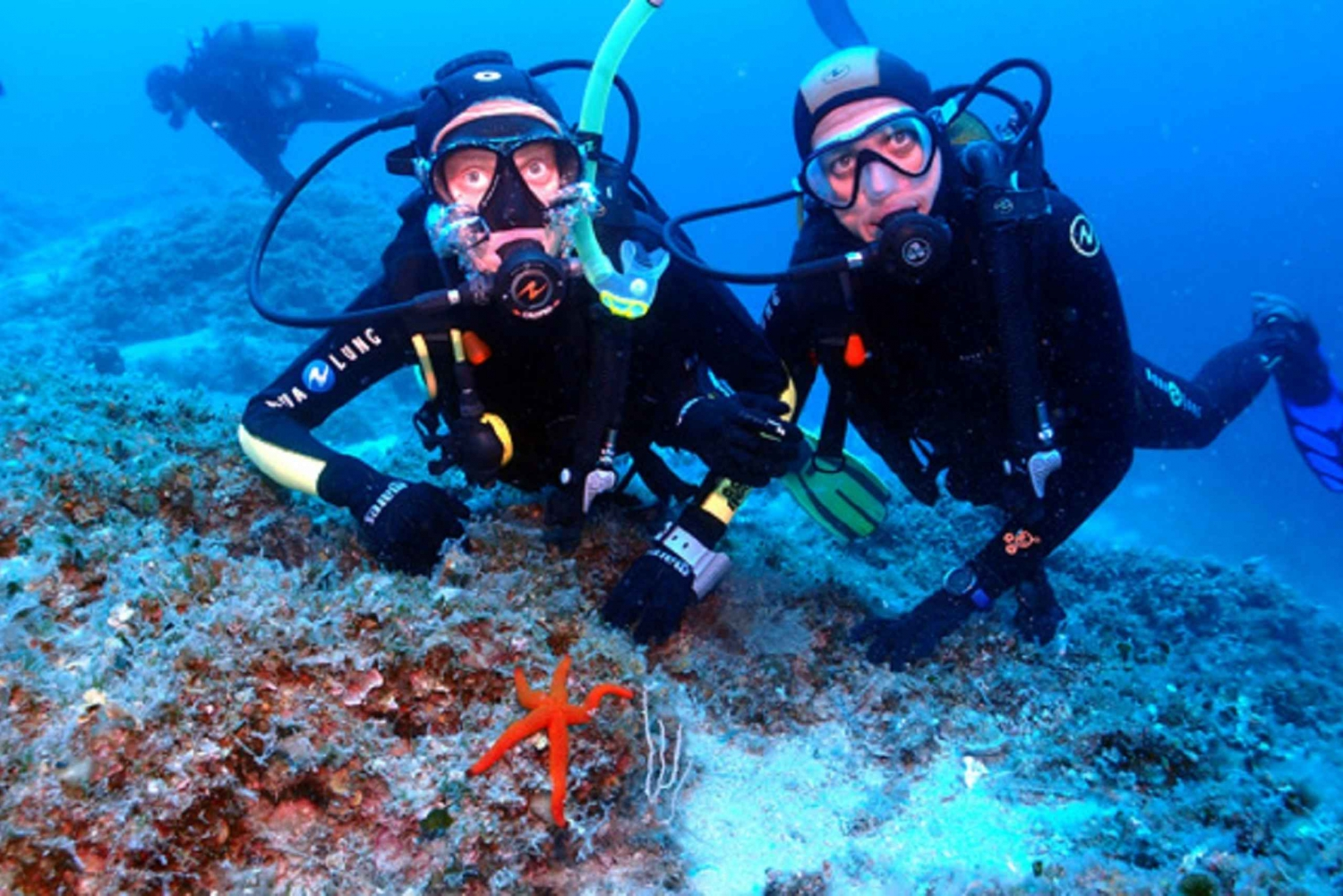 Split: Half-Day Scuba Diving for Certified Divers