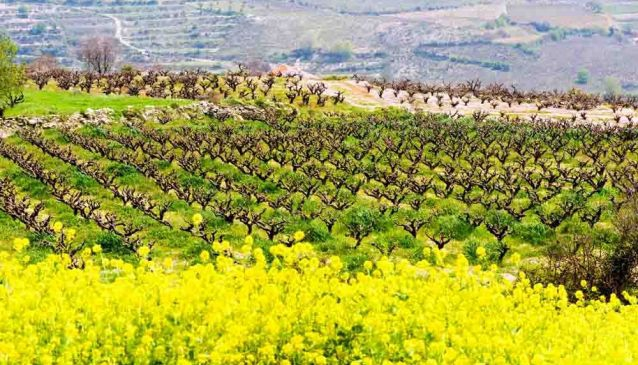 Choose your wine route in Cyprus