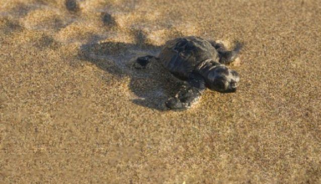 Saving Cyprus' Caretta-Caretta Turtles