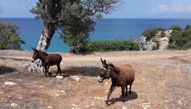 Cyprus EcoTour Adventures