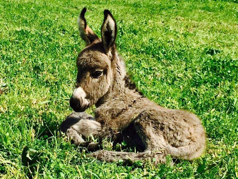 Image result for cyprus donkeys